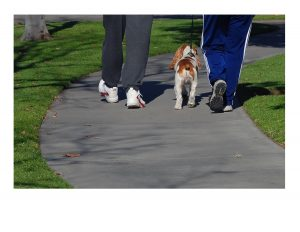 Living longer through exercise & Dog walking